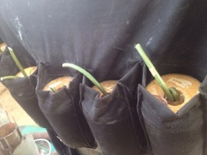 suicide-bomb-vest
