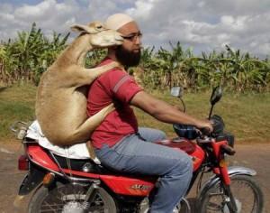 muslim-beastiality
